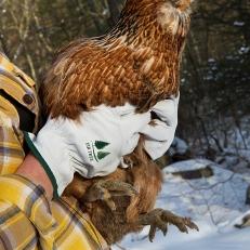 Holding Brown Chik